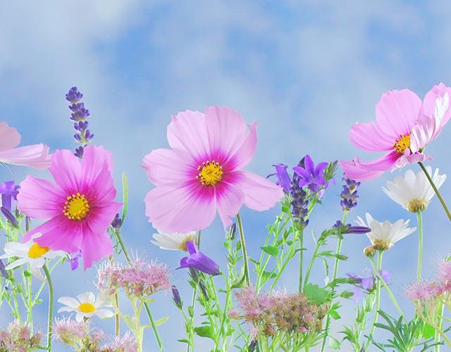 Origen y beneficios de las flores de Bach