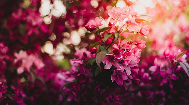 Origen y beneficios de las flores de Bach que debes conocer