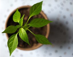 Plantas de interior peligrosas