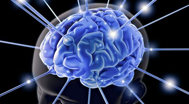 Funciones de la serotonina