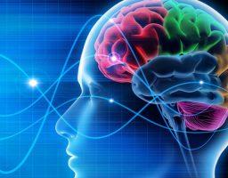 Las partes y funciones del cerebro