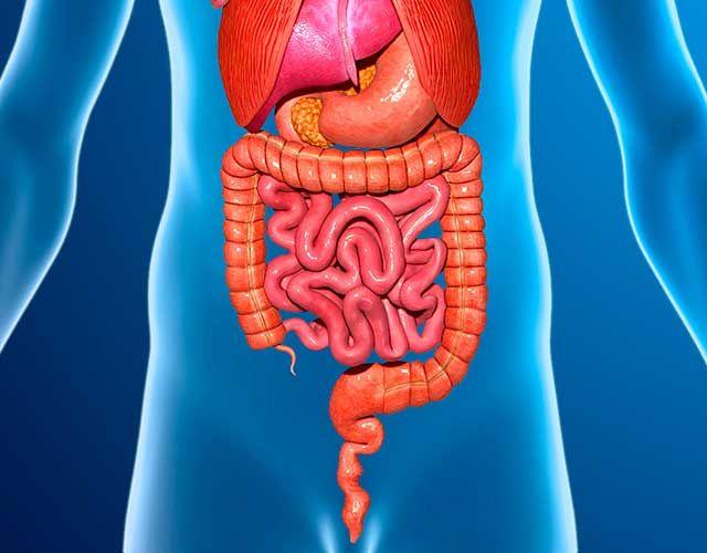 signos de que tu aparato digestivo no funciona bien