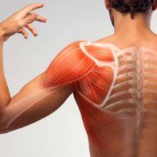 Señales de los músculos que indican problemas