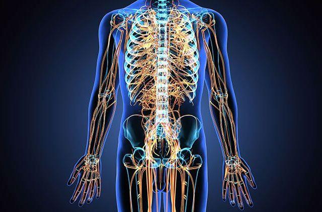 consejos para fortalecer el sistema nervioso