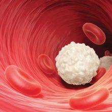 Causas de descenso de los glóbulos blancos