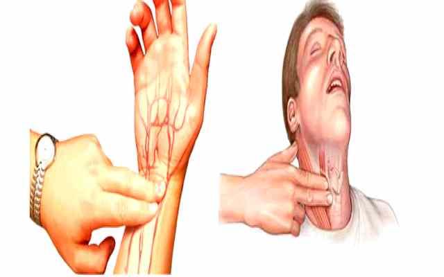 Cuáles son las pulsaciones normales en reposo