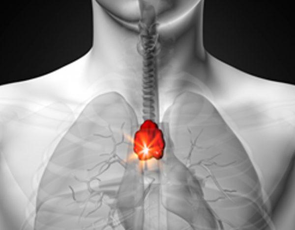 La glándula timo y sus funciones
