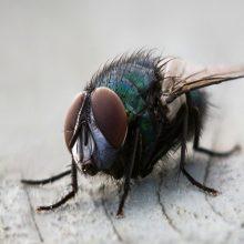 La mosca Tse-Tse y la enfermedad del sueño